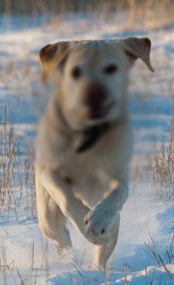Valokuva koirasta, jonka kasvojen kohdalla on huonosti näkyvä alue.
