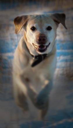 Valokuva koirasta, jonka kasvot näkyvät, mutta muu kuva-ala jää hämäräksi.