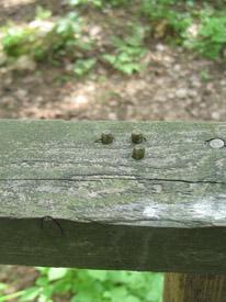 Puisessa käsijohteessa on kolme puutappia.