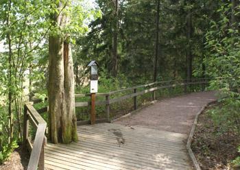 Luontopolku, jossa etualalla on puuta ja taka-alalla polku muuttuu hiekkapoluksi.